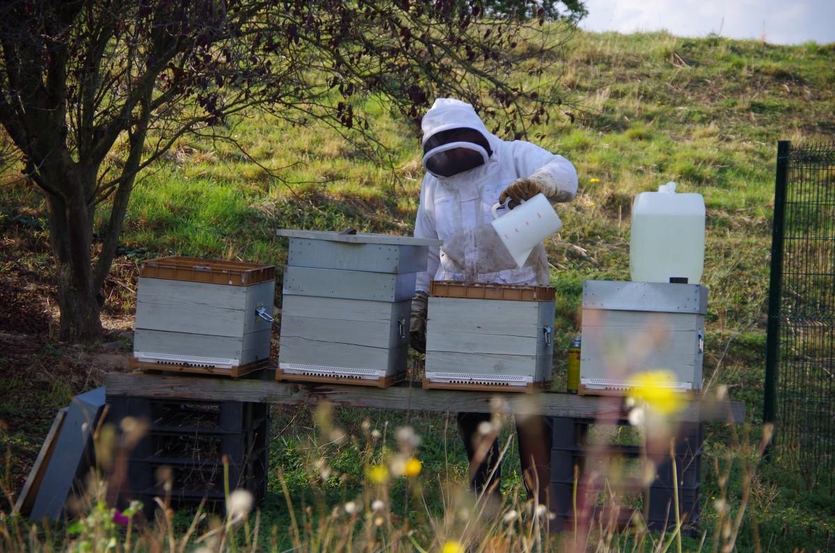 honey-harvesting
